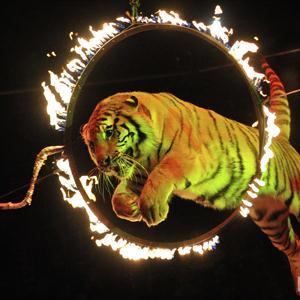Цирки Купавны