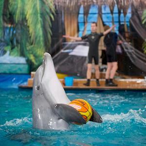 Дельфинарии, океанариумы Купавны