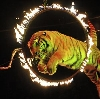 Цирки в Купавне