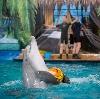 Дельфинарии, океанариумы в Купавне