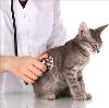 Ветеринарные клиники в Купавне